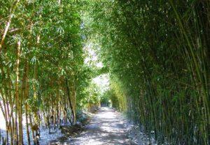Bamboo Australia
